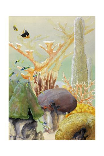 Fish Swim Between Coral Colonies Formed over the Centuries-Else Bostelmann-Giclee Print
