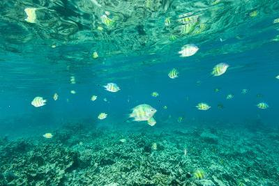 Fish Swimming in the Shallow Waters Off Palau-Michael Melford-Photographic Print