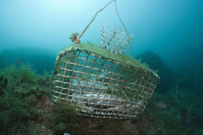 Fish Trap over a Coral Reef, Cap De Creus, Costa Brava, Spain-Reinhard Dirscherl-Photographic Print