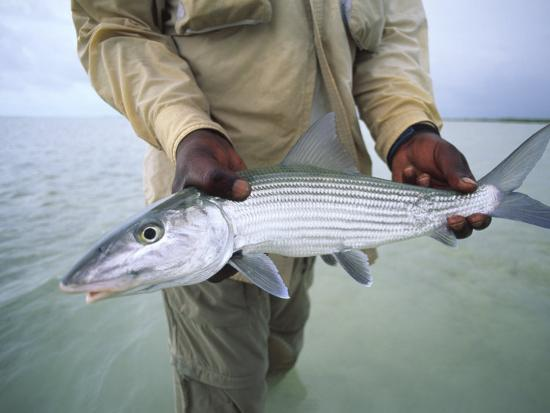 Fisherman Holds Out a Bonefish Off Great Exuma Island-Michael Melford-Photographic Print