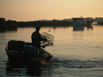 Fisherman in Boat Emptying His Crab Trap-Medford Taylor-Photographic Print