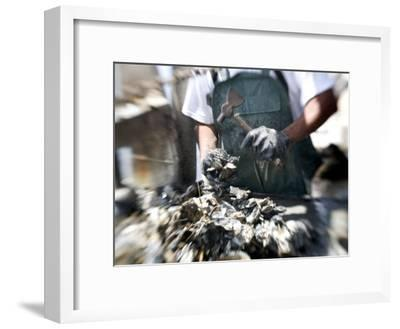 Fisherman Separating Clumps of Oysters-Tyrone Turner-Framed Photographic Print