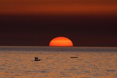 Fishermen Lay their Nets in the Sea as the Sun Sets-Mohammed Saber-Photographic Print