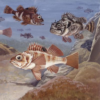 Fishes, Different Examples--Giclee Print