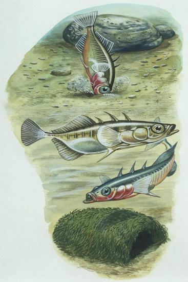 Fishes--Giclee Print