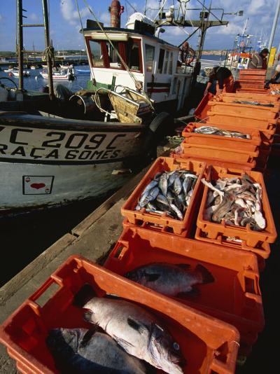 Fishing Boats Unloading, Sagres, Algarve, Portugal, Europe-Neale Clarke-Photographic Print