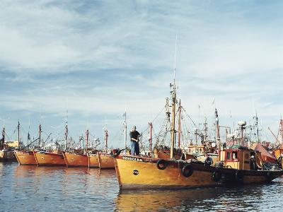 Fishing Fleet in Port, Mar Del Plata, Argentina, South America-Mark Chivers-Photographic Print