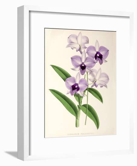 Fitch Orchid Dendrobium Phlaenopsis-New York Botanical Garden-Framed Art Print