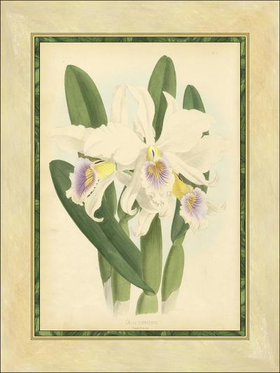 Fitch Orchid II-Fitch-Art Print