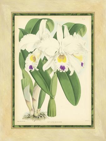 https://imgc.artprintimages.com/img/print/fitch-orchid-iii_u-l-p8l9xl0.jpg?p=0
