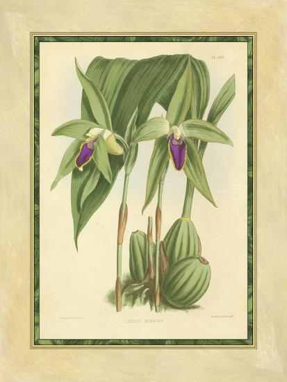 Fitch Orchid VI-J^ Nugent Fitch-Art Print