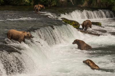 Five Bears Salmon Fishing at Brooks Falls-Nick Dale-Photographic Print