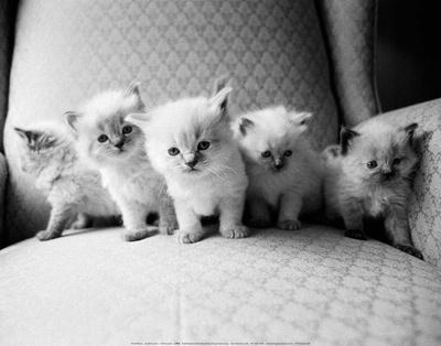 https://imgc.artprintimages.com/img/print/five-kittens_u-l-f5h7gw0.jpg?p=0