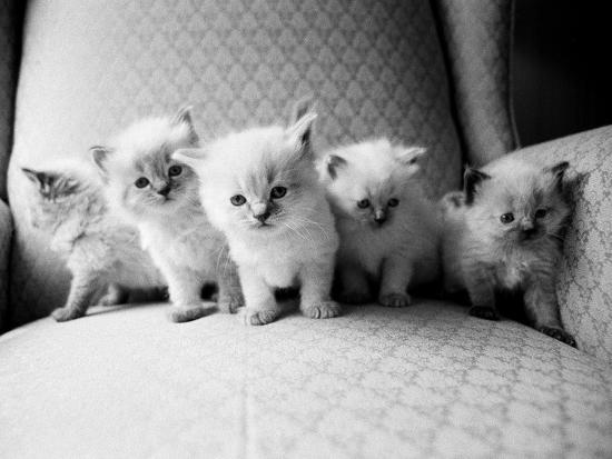 Five Kittens-Kim Levin-Photographic Print