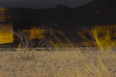 Flame Trees, Namibia-Valda Bailey-Photographic Print