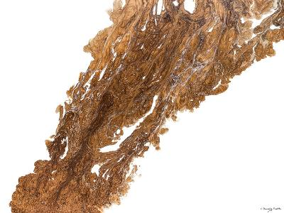 Flames of Copper-Lis Dawning Scott-Art Print