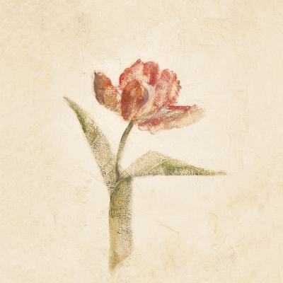 Flaming Parrot Tulip on White Crop-Cheri Blum-Art Print