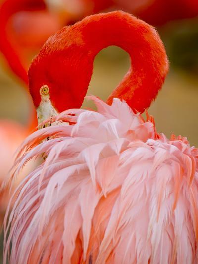 Flamingo 2-Dennis Goodman-Photographic Print