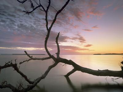 Flamingo Bay, Everglades National Park, Florida, Usa-Tim Fitzharris-Photographic Print