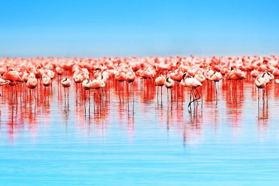 Flamingo Birds in the Lake Nakuru, African Safari, Kenya-Anna Om-Photographic Print