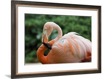 Flamingo CZ 17 4-Robert Michaud-Framed Giclee Print