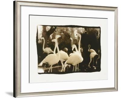 Flamingo Group-Theo Westenberger-Framed Photographic Print