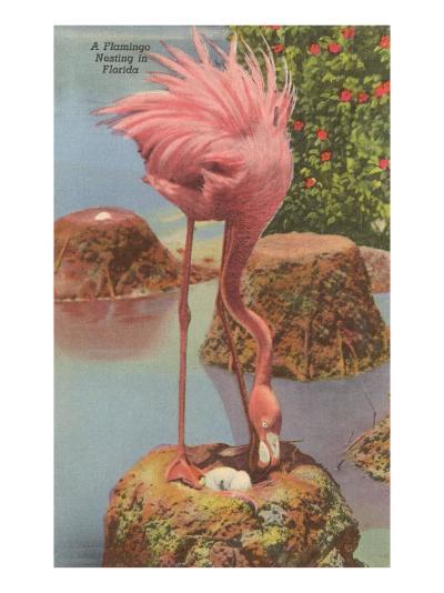Flamingo Nesting in Florida--Art Print