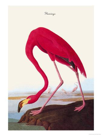 https://imgc.artprintimages.com/img/print/flamingo_u-l-p2dr860.jpg?p=0