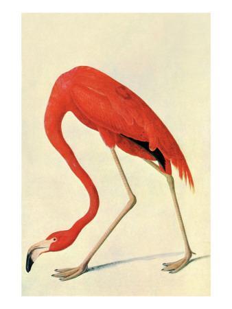 https://imgc.artprintimages.com/img/print/flamingo_u-l-pdlzkp0.jpg?p=0