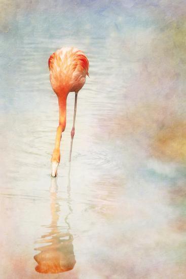 Flamingo-Roberta Murray - Uncommon Depth-Photographic Print
