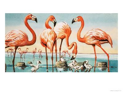 Flamingoes--Giclee Print