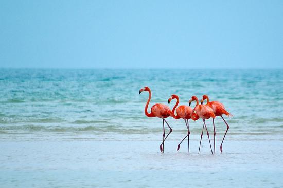 Flamingos and Ocean-Lantern Press-Art Print