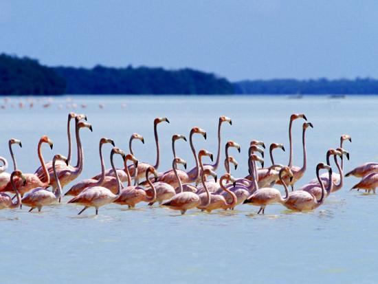 Flamingos at Laguna Oviedo, Dominican Republic, Caribbean-Greg Johnston-Photographic Print