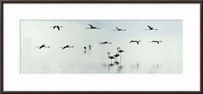 Flamingos in a Lake, Lake Manyara, Tanzania