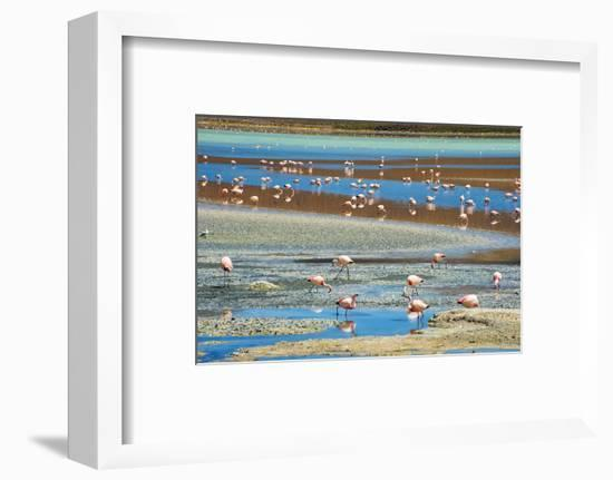 Flamingos in Laguna Hedionda, Potosi Department, Bolivia-Keren Su-Framed Photographic Print