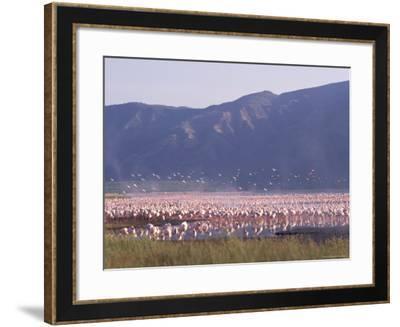 Flamingos, Lake Bogoria, Kenya, East Africa, Africa-Storm Stanley-Framed Photographic Print