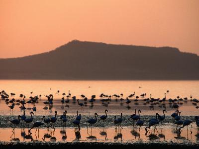 Flamingos Silhouetted in Lake Abiata, Abiyata-Shala National Park, Oromia, Ethiopia-Ariadne Van Zandbergen-Photographic Print
