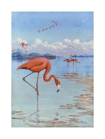 https://imgc.artprintimages.com/img/print/flamingos-wade-in-shallow-tropical-and-subtropical-waters_u-l-pojspg0.jpg?p=0