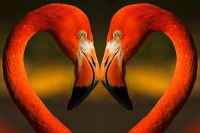 Flamingos with Heart Shaped Necks-VAILLANCOURT PHOTOGRAPHY-Photographic Print