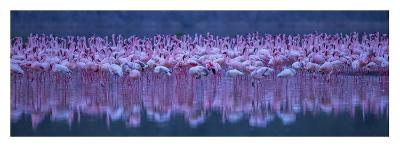 Flamingos-David Hua-Giclee Print