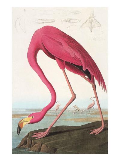 Flamingos--Art Print