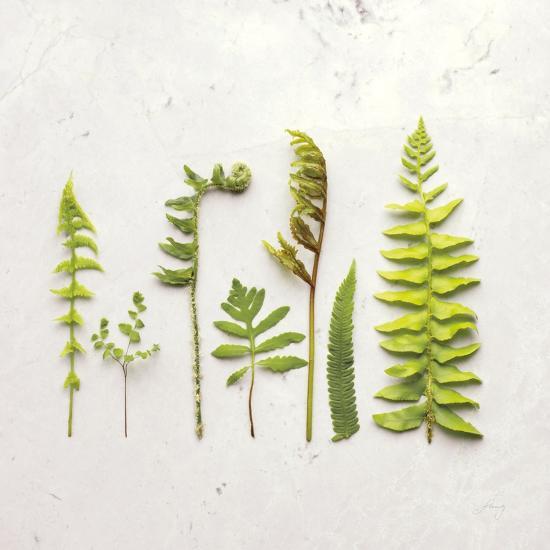 Flat Lay Ferns IV-Felicity Bradley-Art Print