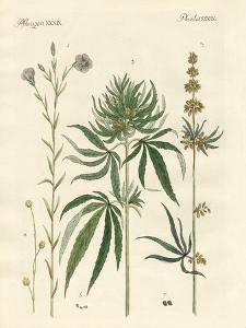 Flaxs and Hemps