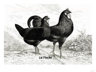 Fleche--Art Print