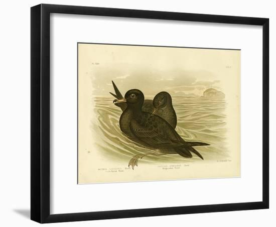 Fleshy-Footed Petrel, 1891-Gracius Broinowski-Framed Giclee Print