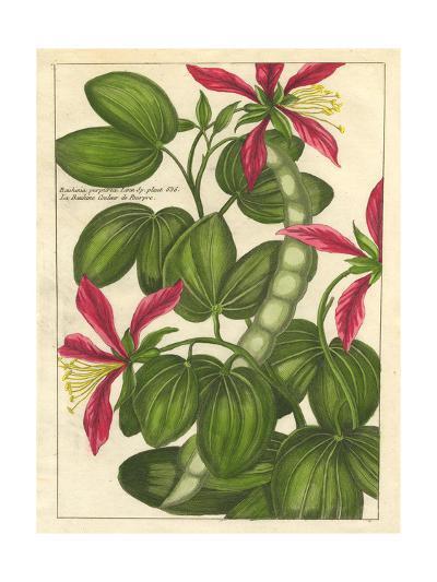 Fleur De Rouge VI--Art Print