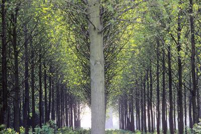 Flevoland, Man-Made Forest-Marcel Malherbe-Photographic Print