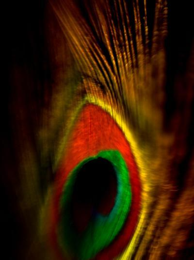 Flight Abstraction-Clive Nolan-Photographic Print