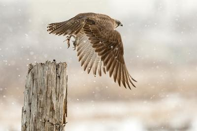 Flight Against the Snowstorm-Osamu Asami-Photographic Print