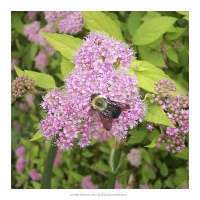 Flight of the Bumble Bee I-Alicia Ludwig-Art Print